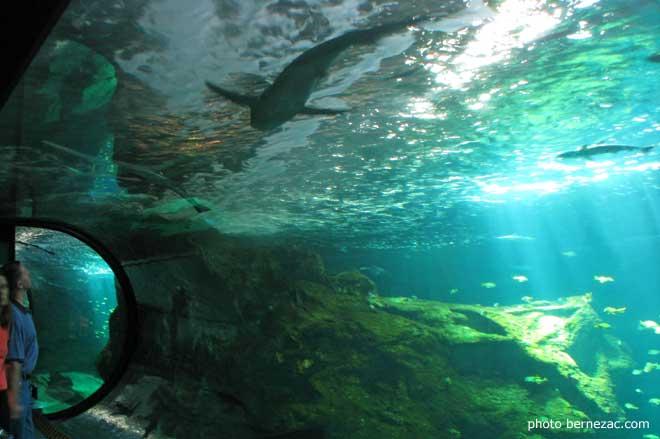Visite L 39 Aquarium De La Rochelle